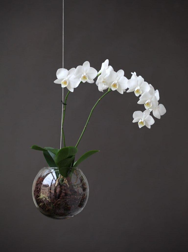 Zvěsné aerárium s bílou orchidejí